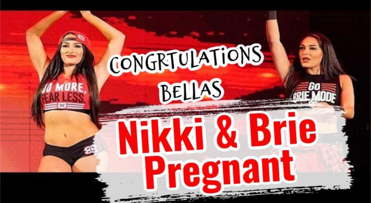 nikki and brie bella pregnant